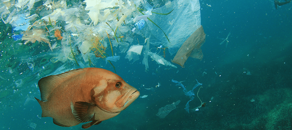 Fish Eat Plastic
