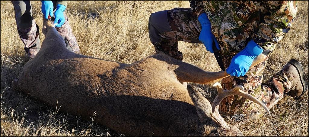Cleaning Deer