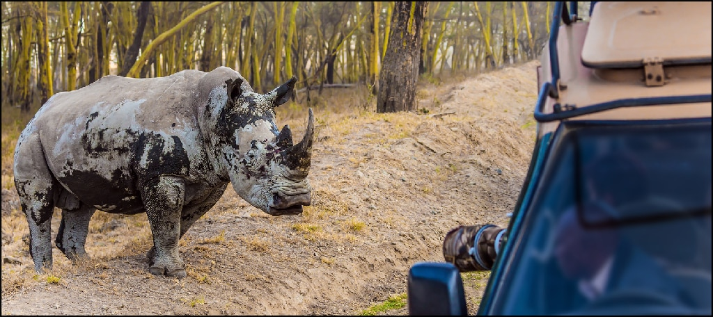 Rhino and Tourism