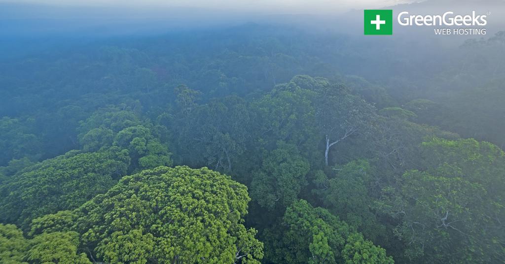 Amazon Rainforest Day