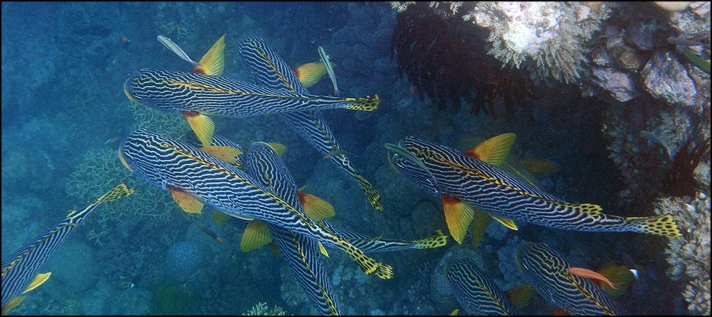 Coral Reef Fish Habitat