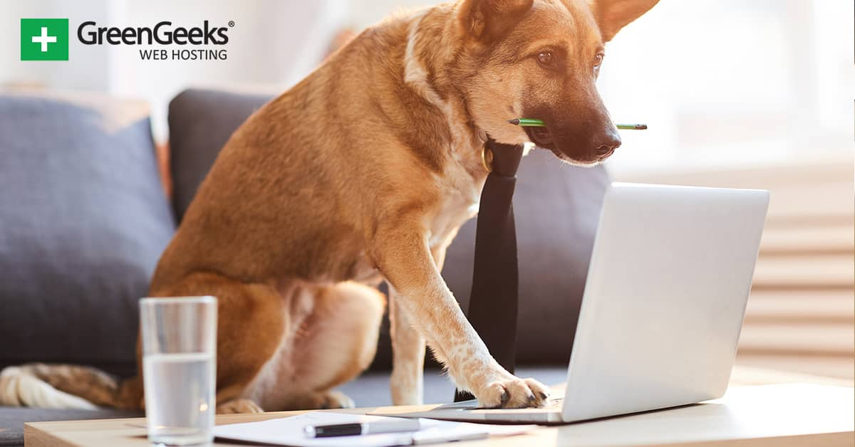 Create a Blog About a Dog
